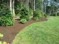 landscaping-with-mulched-beds-and-evergreens